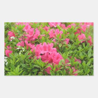Pink rhododendron spring flower sticker