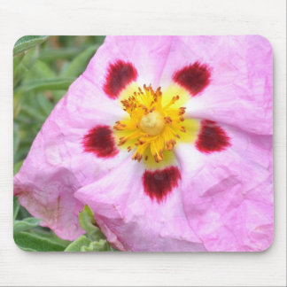 Pink Rock Rose Mouse Pads