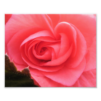 Pink Rose 8x10 Photography Print Photographic Print
