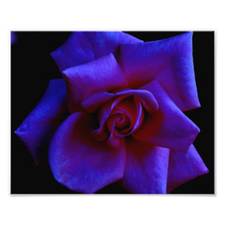Pink Rose at Midnight by Verde Photographic Print