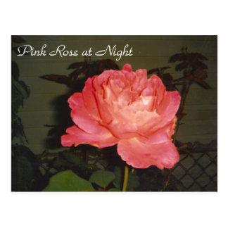 Pink Rose at Night Postcard