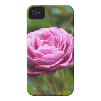 Pink rose  BlackBerry Bold Case-Mate Barely There™ iPhone 4 Case-Mate Case