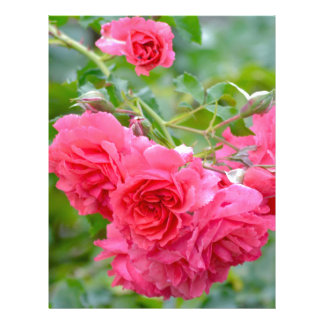 Pink  Rose Bouquet Letterhead