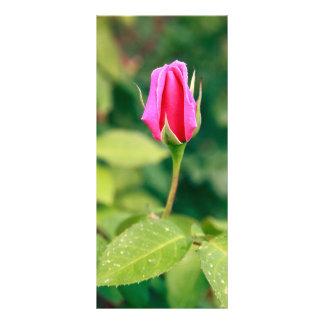 Pink rose bud rack card