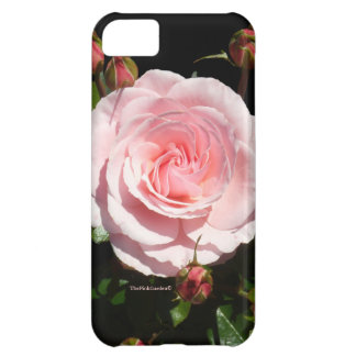 Pink Rose Buds iPhone 5C Cases