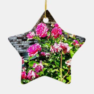 Pink Rose Bush Ceramic Star Ornament
