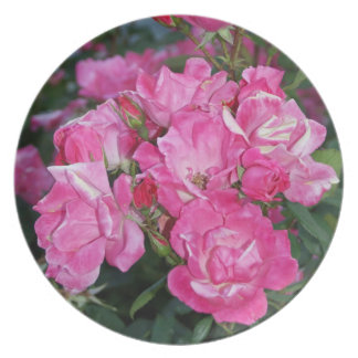 Pink Rose bush - plate