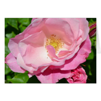 Pink Rose Card