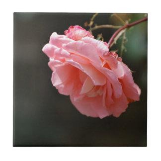 Pink Rose Ceramic Tiles