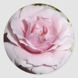 Pink Rose Classic Round Sticker