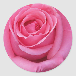 Pink Rose Close-Up Classic Round Sticker