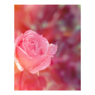 Pink rose covered by morning dew letterhead