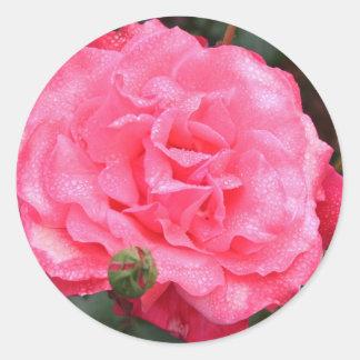 Pink Rose & Dew Classic Round Sticker