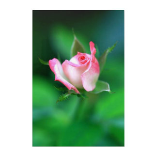 Pink Rose Flower Nature Acrylic Wall Art