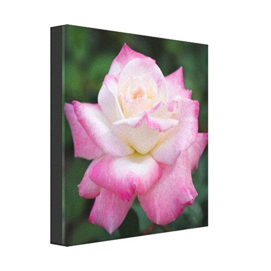 Pink Rose Flower Nature Canvas