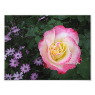 Pink Rose Flower Photographic Print