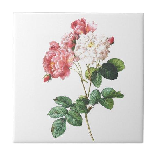 Pink Rose Flower Vintage Botanical Print Tile