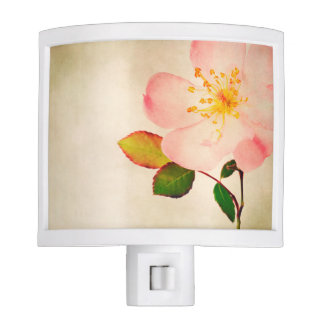 Pink Rose Flowers - Flower Roses on Watercolor Night Lights