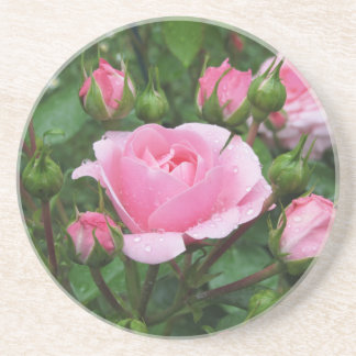Pink rose flowers with water droplets in spring beverage coasters