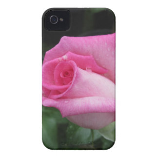 Pink rose flowers with water droplets in spring iPhone 4 Case-Mate cases