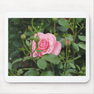 Pink rose flowers with water droplets in spring mouse pad