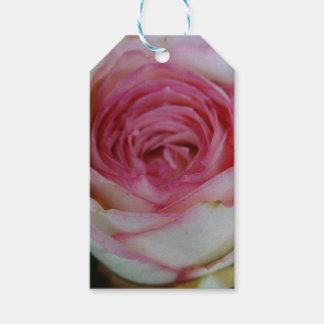 Pink rose gift tags
