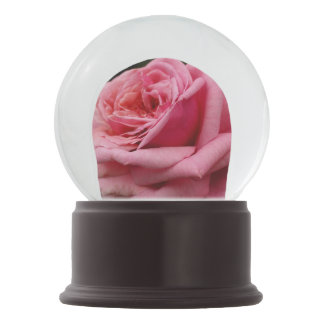 Pink Rose I Pretty Floral Photography Snow Globe