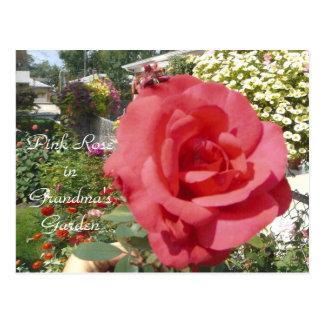 Pink Rose in Grandma's Garden Postcard