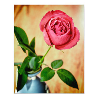 Pink Rose in Wedgwood Vase Print Photo Art