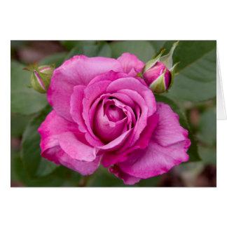Pink Rose jjhelene Valentine Greeting Card