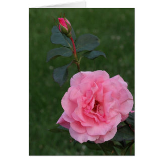 Pink Rose, Keeping In Touch Card