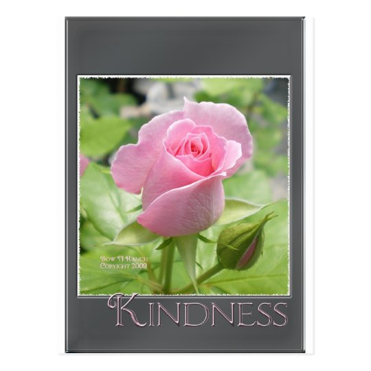 Pink Rose: Kindness Postcard