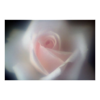 Pink Rose Large Poster/Print Poster