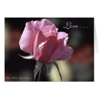 Pink Rose Love Card