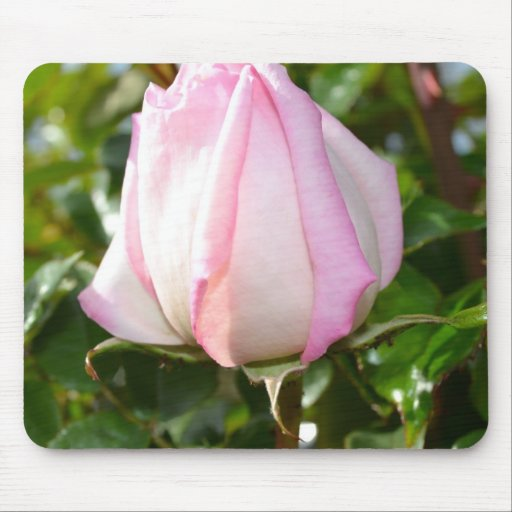 Pink Rose Mouse Pad
