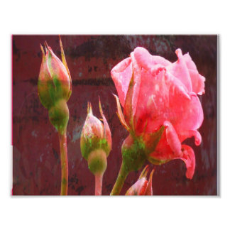 Pink Rose on Grungy Background Photo Print