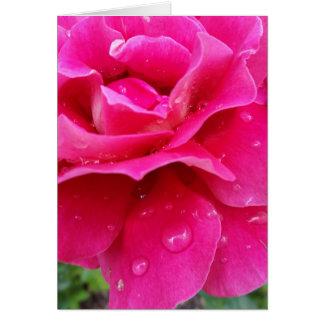 pink rose petals card