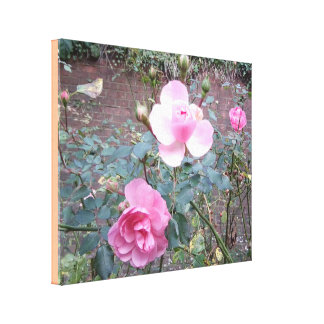 Pink Rose Photo Canvas Print