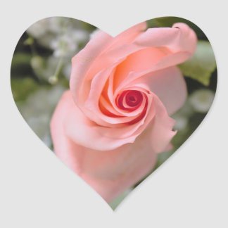 Pink Rose Photo Heart Sticker