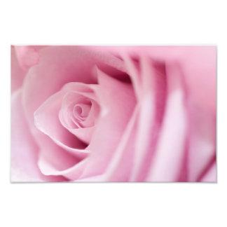 Pink Rose Photo Art
