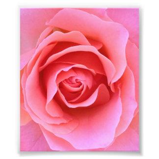Pink Rose Art Photo