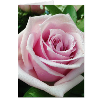 Pink Rose Raindrop Petals Floral Greeting Cards