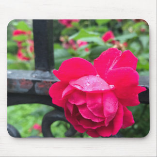 Pink Rose Raindrops Dew Garden Gate Photo Mouse Pad