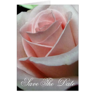 """Pink Rose """"Save The Date Cards"""""""