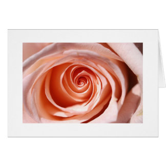 Pink Rose Study II Card