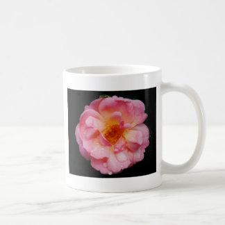 Pink Rose w Dew Drops Black Background Mug