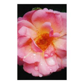Pink Rose w Dew Drops Black Background Stationery Paper