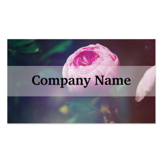 Pink Rosebud, Glowing Blue, Floral Photograph Business Card