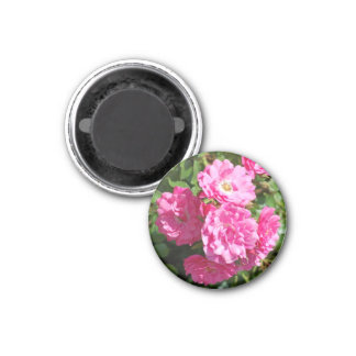 pink_roses 1 inch round magnet