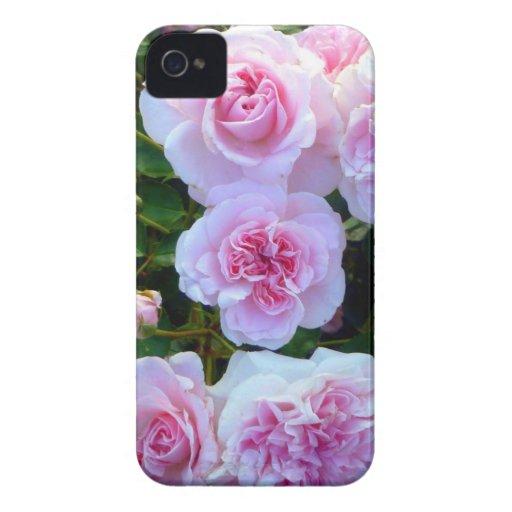 Pink Roses (Blackberry Bold)